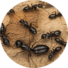 close up of group of ants
