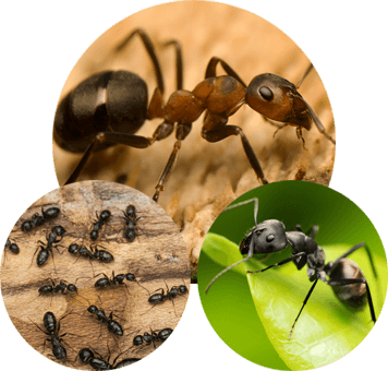 several pictures of different types of ants
