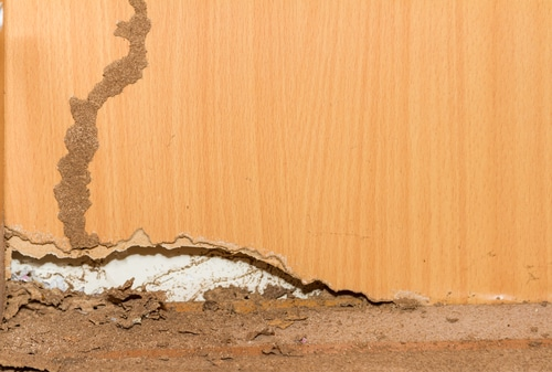 Traces of termites on old wood background.