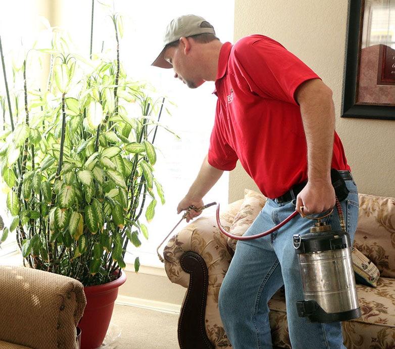 Living Room Pest Control