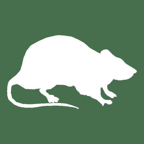 silhouette rat