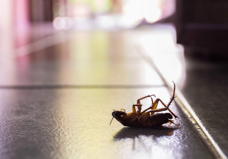 Silhouette dead cockroaches