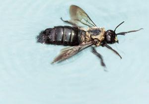 Pool bug