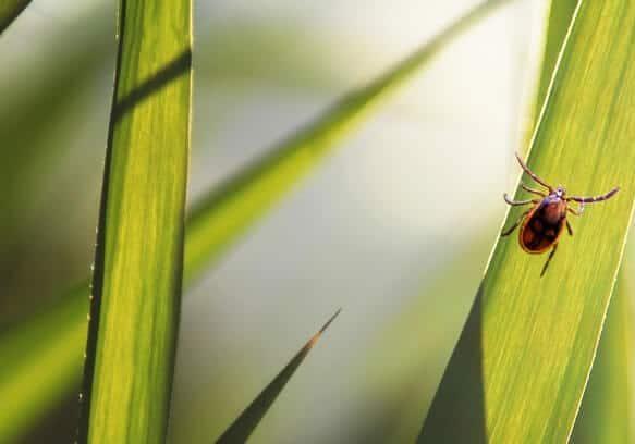 Yard Ticks