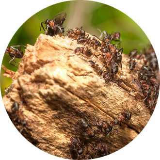 ants on stump