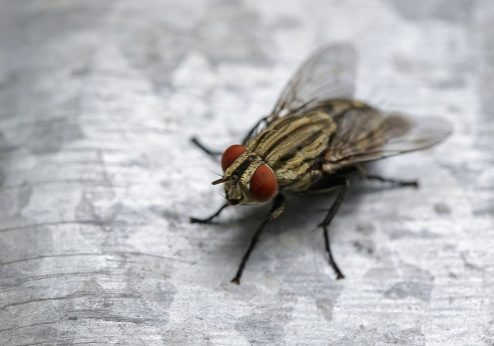 Fly sitting on zinc metal