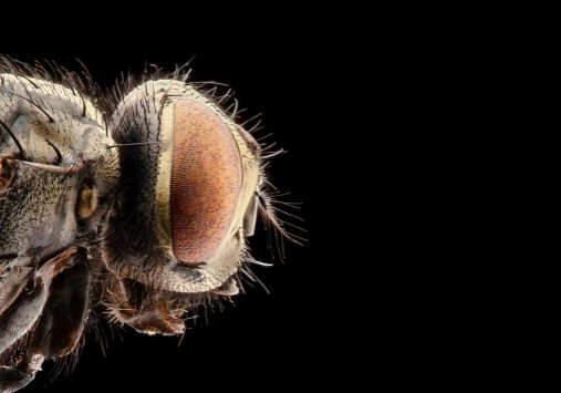 portrait of a fly on a black background