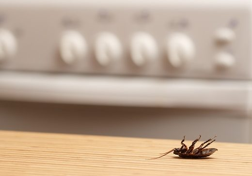Dead cockroaches in an apartment kitchen. Inside high-rise build