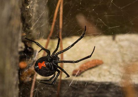 Oklahoma Fall Spider