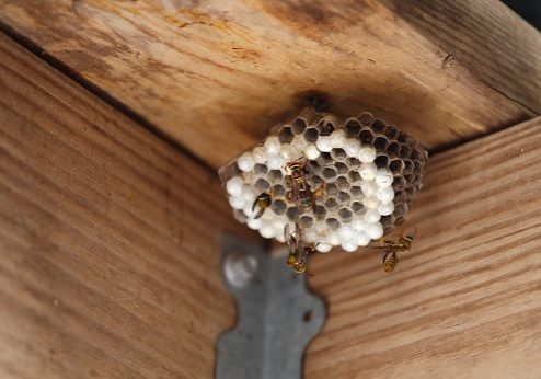 Wasp nest on the ceiling