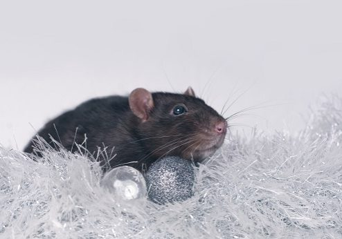 Mouse with tinsel