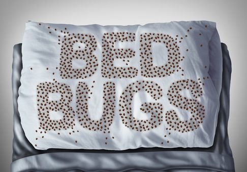 "pillow with bed bugs on it spelling word ""bed bugs"""